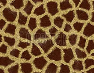 Giraffe Prints Print Roller Blinds Luxury Blinds Direct